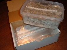 Open de doos van je kweekset